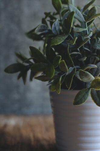 moody-plant